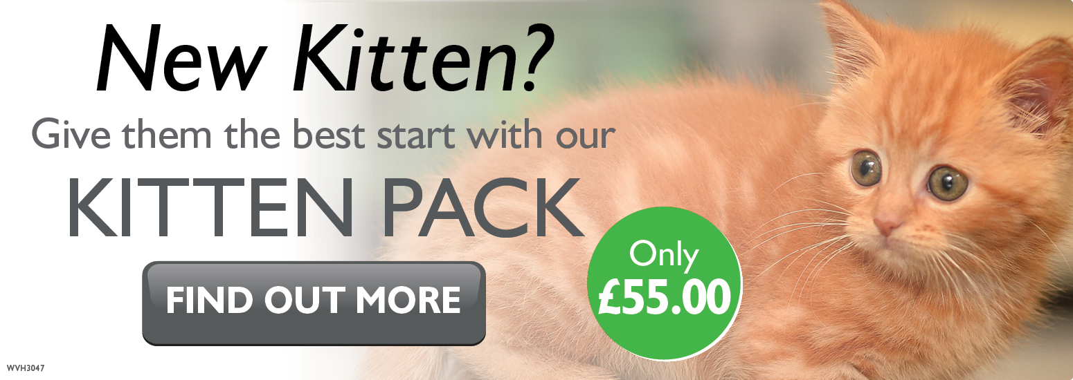 Kitten Pack covering kitten injections, flea & worm treatment, and much more for only £55 at vets in Biddulph