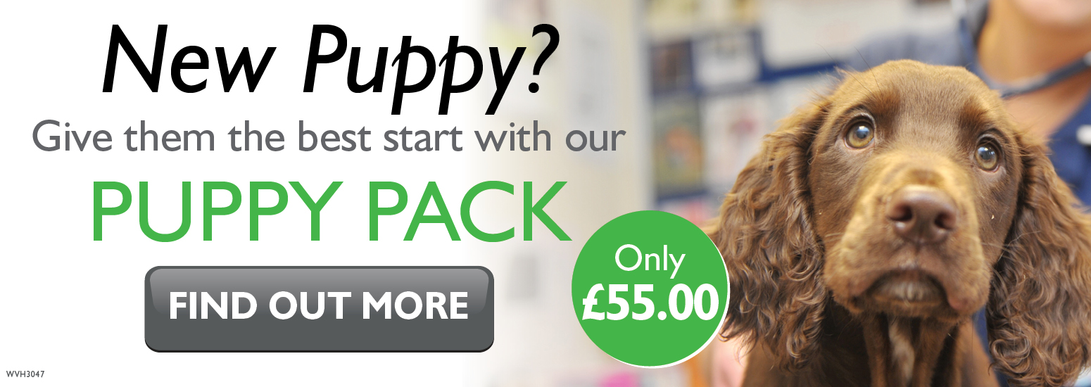Puppy Pack covering puppy injections, flea & worm treatment, and much more for only £55 at vets in Biddulph